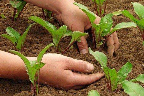 aprire un azienda agricola