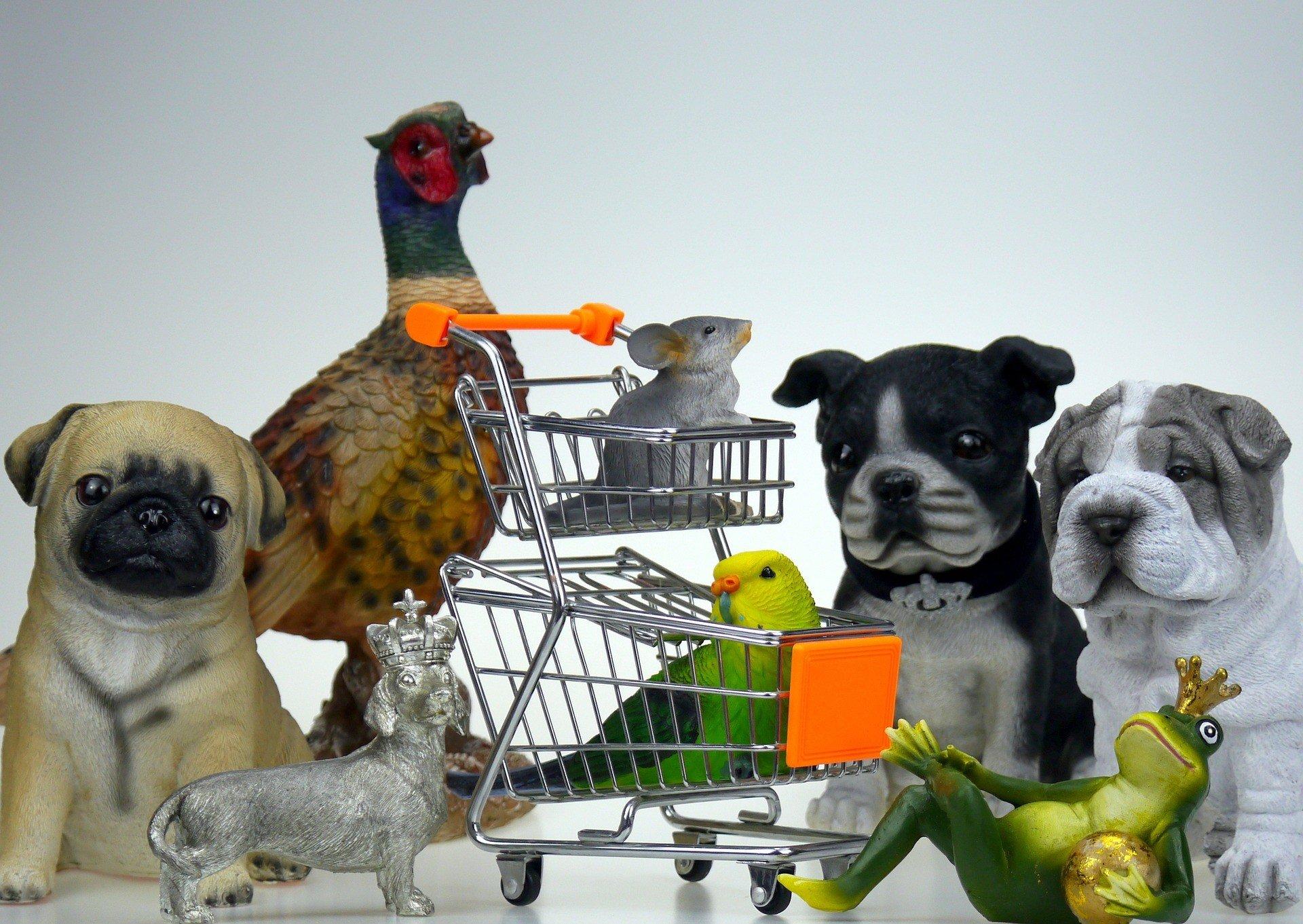 aprire un pet shop