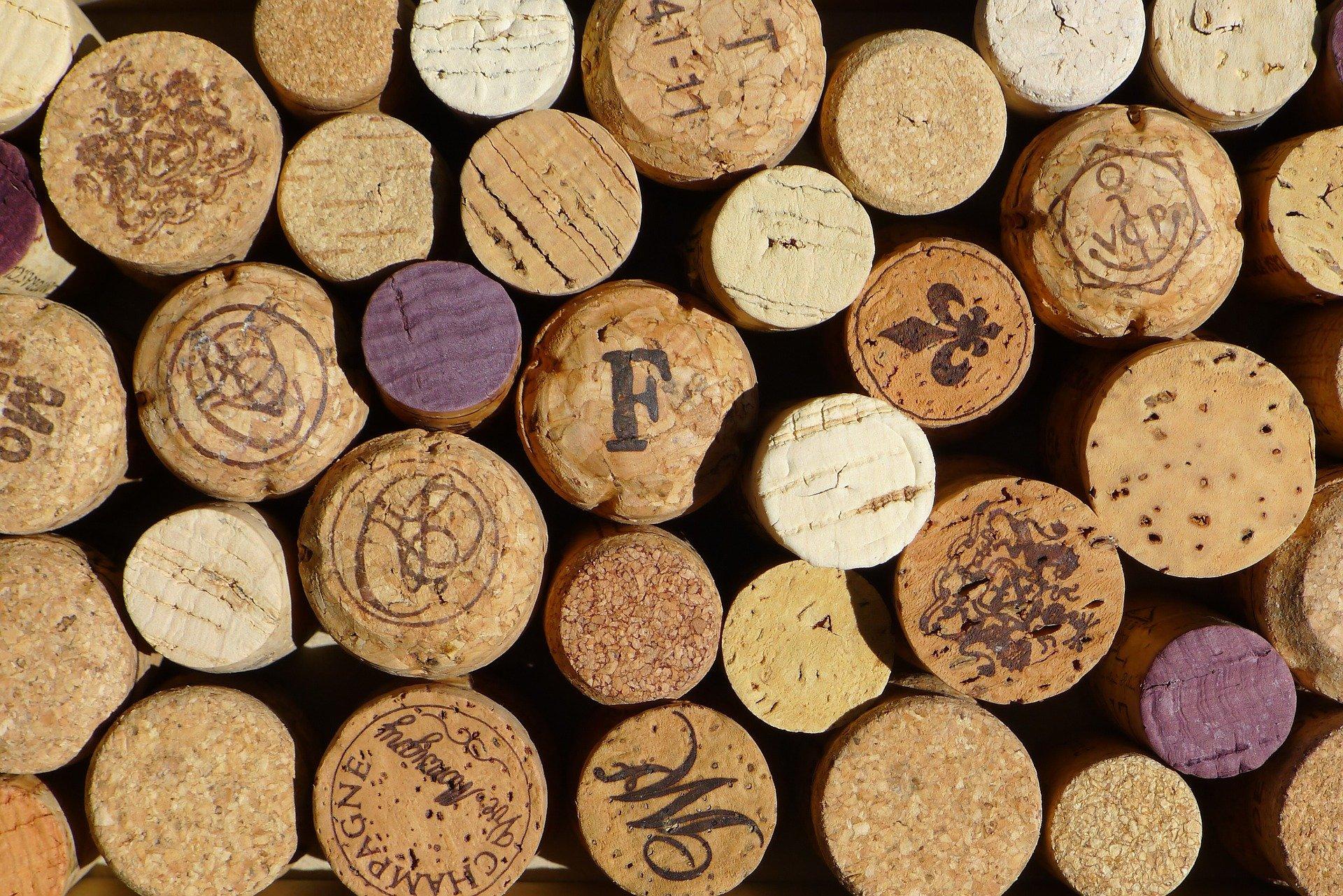 aprire un azienda vinicola