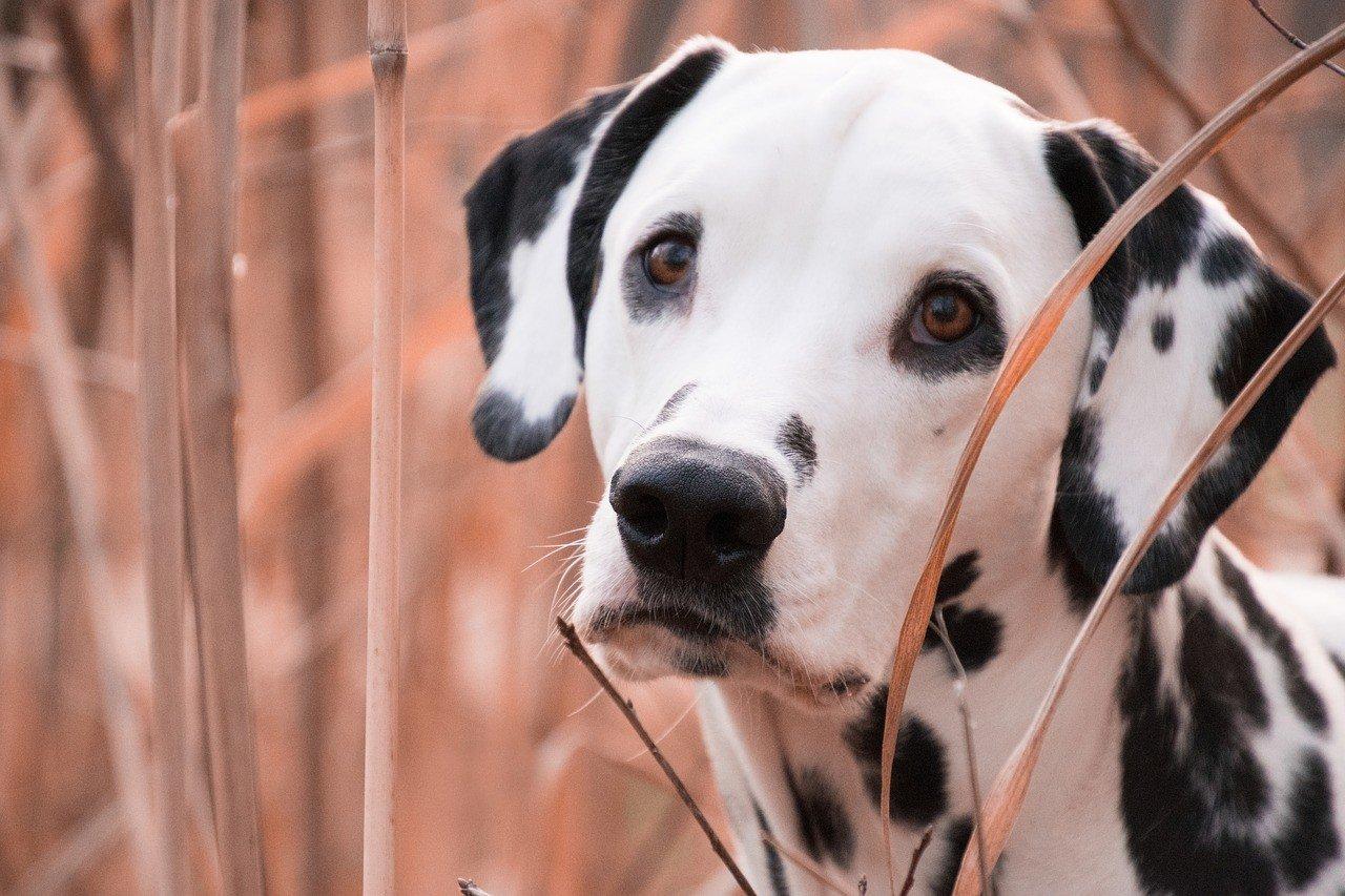 aprire un asilo per cani