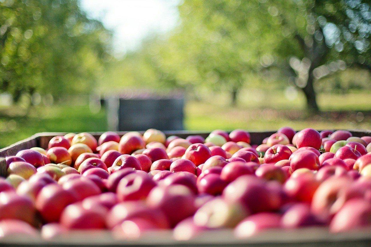 Aprire un'impresa agricola