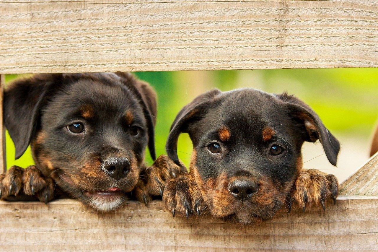 Aprire un centro di pet therapy