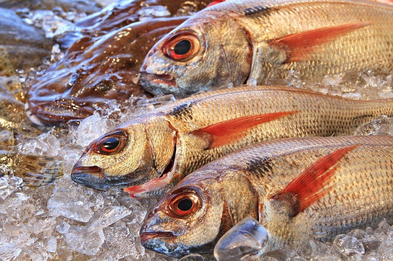 Aprire una gastronomia di pesce