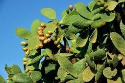 Aprire un turismo rurale in Sicilia
