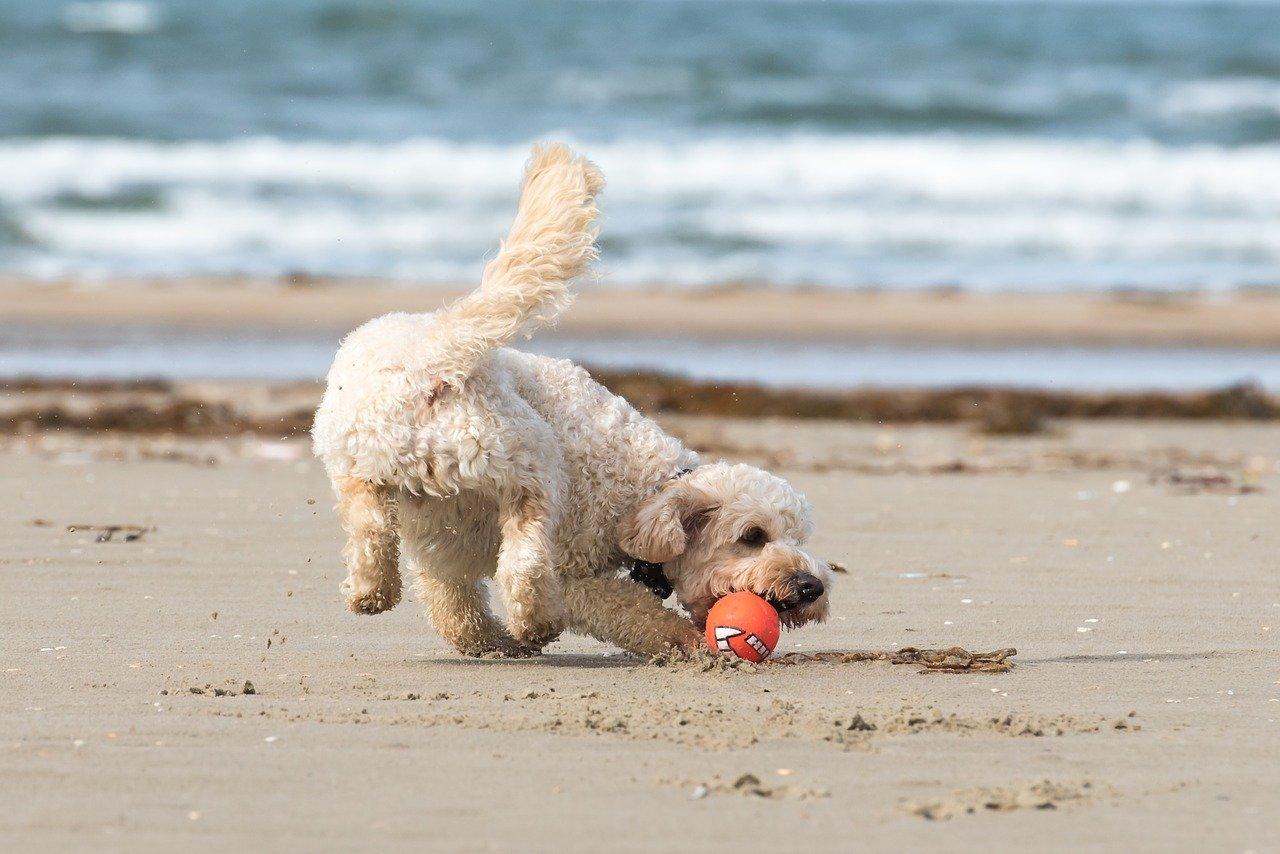 Aprire una spiaggia per cani